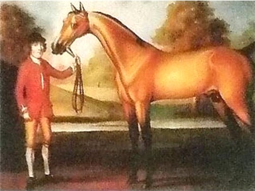 Darcy's Yellow Turk, foaled ca. 1670, possibly imported in utero