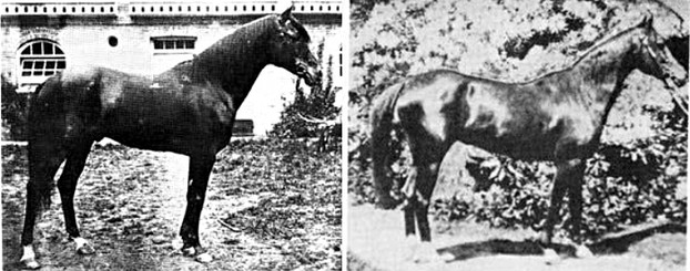 The war horse Kars, foaled 1874, and mare Queen of Sheba, foaled 1875