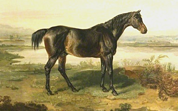 Dr. Syntax, brown (buckskin?) foaled 1811, by Paynator—Beningbrough Mare, by Beningbrough