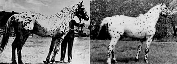 Tavisheen, foaled 1919 (left; photo was also identified as her son Desert King); Burnsides David M, foaled 1960
