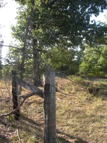 The Old Barbed Wire Fence Line