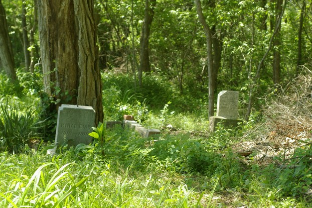 grave stones among trees