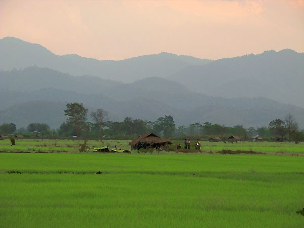 Rice Fields near Thatorn