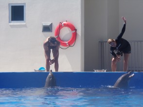 Dolphin Trainers at Marineland