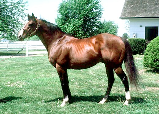 Northern Dancer as a mature stallion at Windfields Farm Maryland