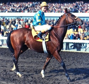 Northern Dancer at two, Ron Turcotte up