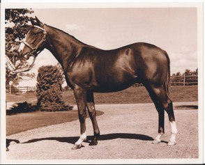 Northern Dancer at age 22 months