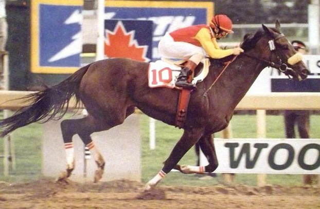 Sam-Son Farm's Dance Smartly, Canadian Triple Crown winner and dam of two Queen's Plate winners.