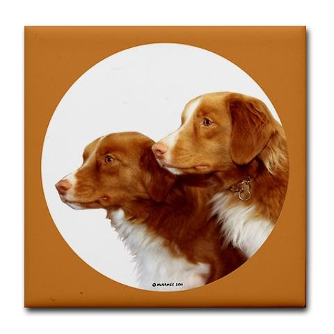 Two Nova Scotia Duck Tolling Retrievers
