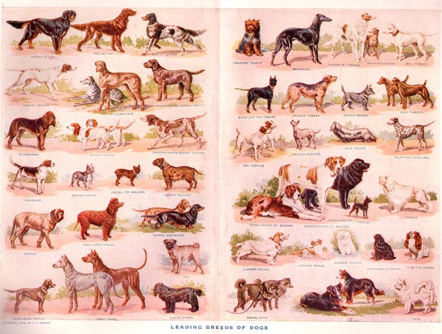 Popular Dog Breeds from 1910, Painted By F.E. Wright