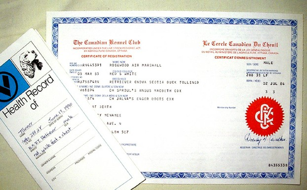 Veterinary health record and an official registration certificate