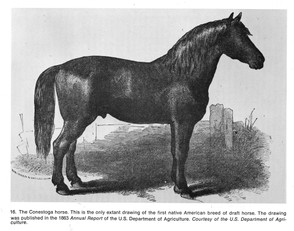The only known drawing of a Conestoga Horse.