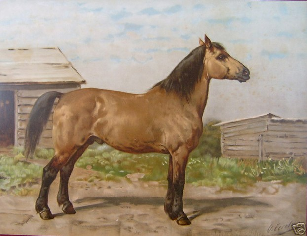 Buckskin Canadian painted by Otto Eerelman (1839-1926)