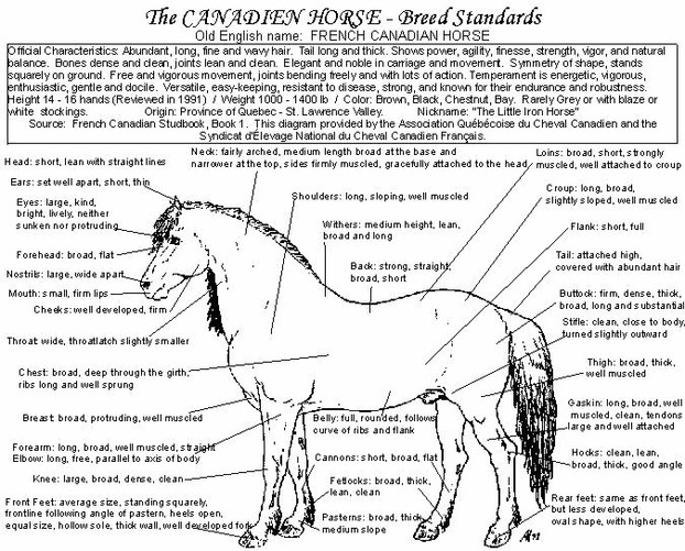 Breed Standard for the Canadian Horse