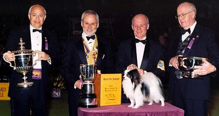 A Papillon named Ch. Loteki Supernatural Being won BIS at the Westminster Kennel Club in 1999.