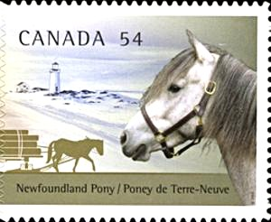 The Newfoundland Pony as pictured on a Canada Post stamp in 2009.