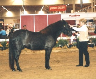 Lassie's Bali Diego in Nov. 2005 at the Royal Agricultural Winter Fair in Toronto.