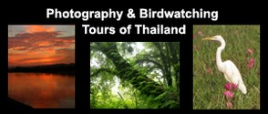 Thailand Photography & Bird Watching Trips