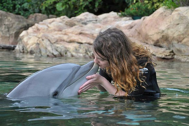 Dolphin in Discovery Cove, Florida