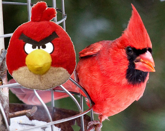 Red Angry Bird is a Cardinal