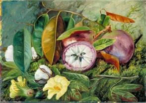 Foliage, Flowers and Seed-Vessels of Cotton and Fruit of Star Apple, Jamaica