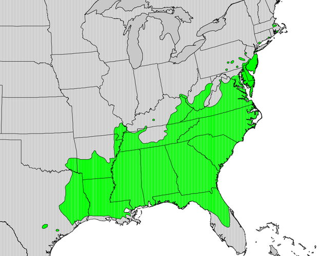Range Map for the American Holly