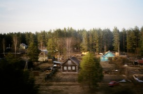 Dachas in the forest