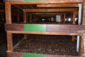 Nutmegs Drying in Processing Plant