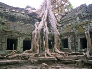 Trees Reclaim Ancient Buildings at Ta Prohm, Cambodia