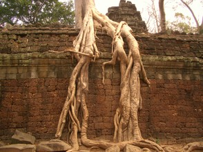 Nature's Revenge at Ta Prohm, Cambodia