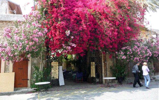 Flower-drenched patios and bars in Lemoses (Limassol)