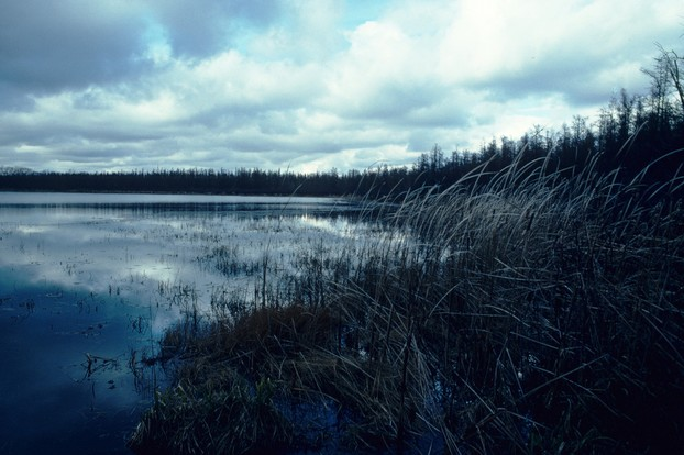 Spruce Lake Bog State Natural Area