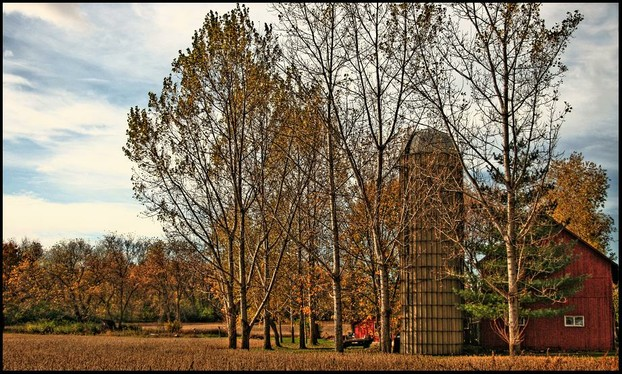 Mitten Farm, dating from ca. 1848, in autumn with stand of birch trees