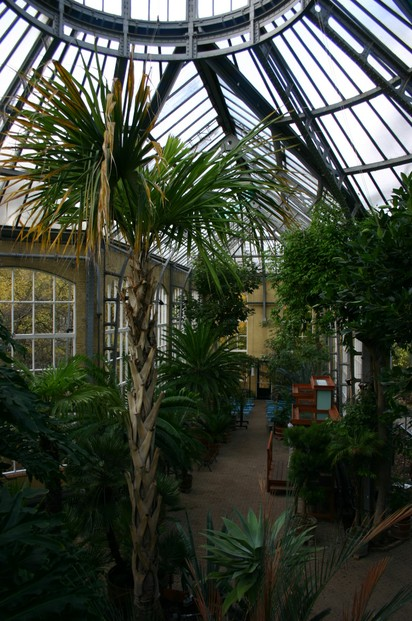 Palmhouse, built in 1912 to shelter palms, cycads, conservatory plants