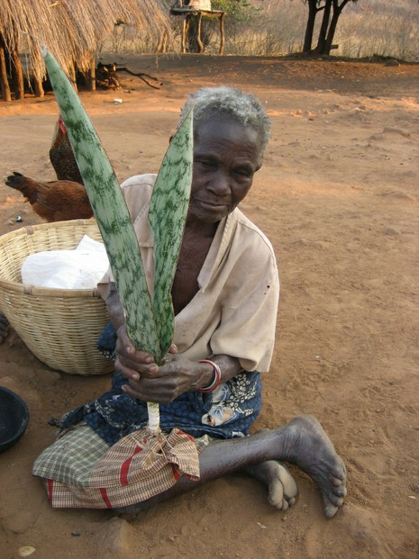82-year-old Rufina James in 2007, Manica province, western Mozambique with bowstring hemp for treating chicken diseases