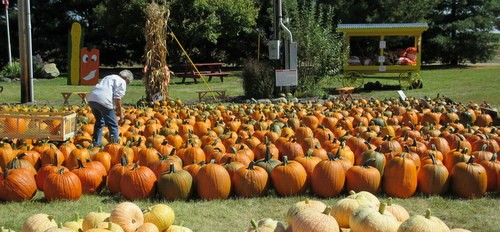 Leininger Farms pumpkin patch