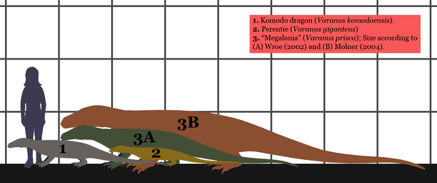 estimated sizes of extant monitor lizards comparative to size estimates for Megalania