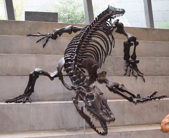 skeletal reconstruction of Megalania, steps of Melbourne Museum, Carlton Gardens, south central Victoria