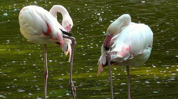 Photo of pink flamingos