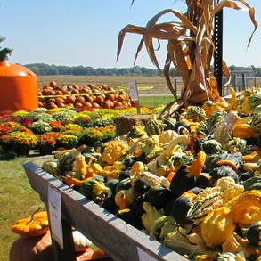 Pumpkin Patch Is Colorful