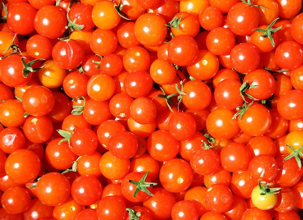 Super Sweet 100 cherry tomatoes galore: sweet perfection as garnishes