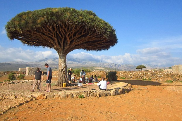 lunch and pleasing vista under Socotra Dragon Blood Tree