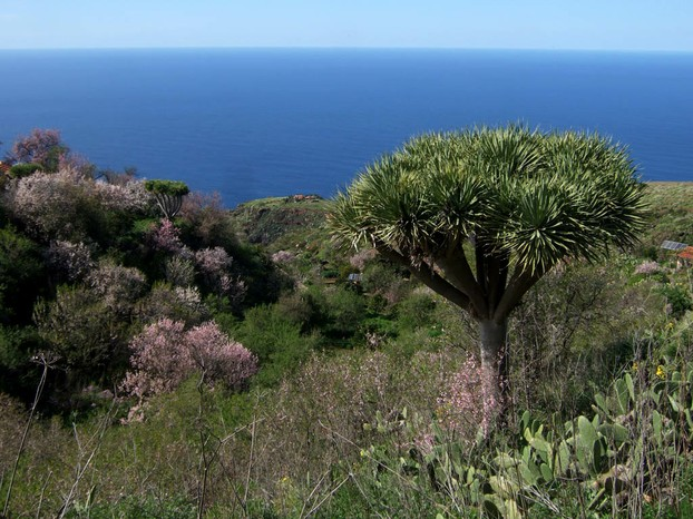 Puntagorda, La Palma, northwestern Canary Islands