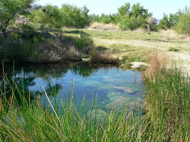 spring at Point of Rocks, Ash Meadows National Wildlife Refuge