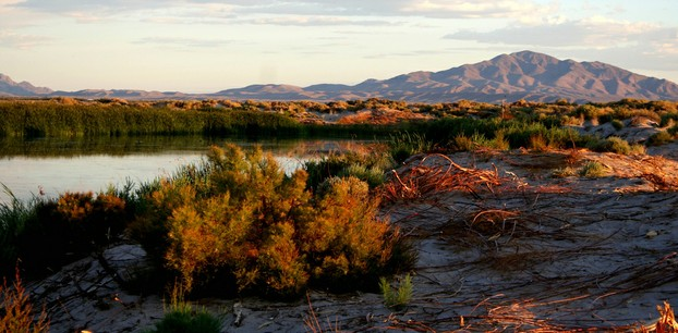 Ash Meadows National Wildlife Refuge: a buffer zone between Devils Hole and sprawling Las Vegas