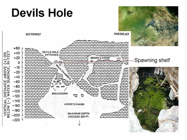 Devils Hole cut-away graphic