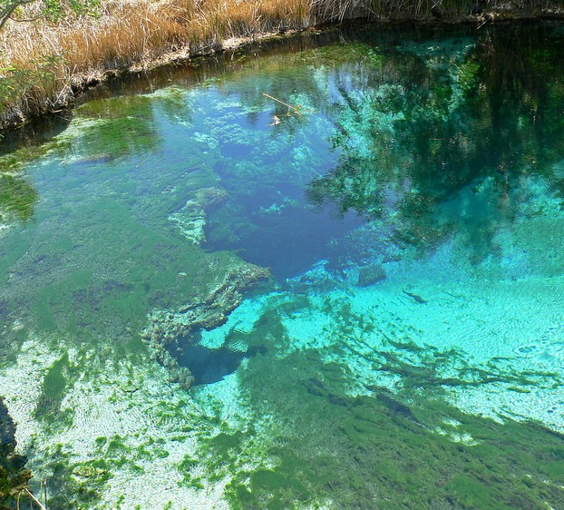 Crystal Spring, Ash Meadows National Wildlife Refuge
