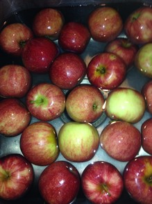 #2 apples picked at local orchard