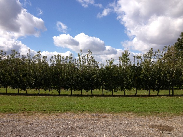 Local apple orchard