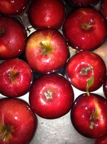 #2 Johnagold apples are great canning apples